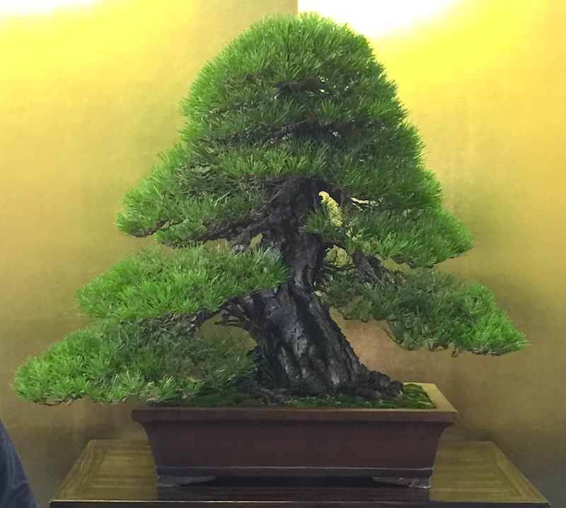 The best of bonsai in Meifuten 2016