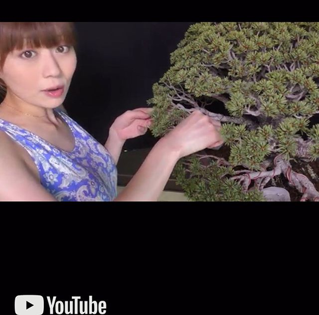 "https://m.youtube.com/watch?v=3fi1fmqAYgY We upload YouTube about wiring. Please check this out. Thanks for subscribing to our channel ""Bonsai IROHA"" ! 針金掛けについての動画をアップしてみました参考になれば嬉しいですBonsai IROHAでチャンネル登録してね 森友美.Tomomi Mori#bonsai#bonsaitree#bonsaiart#bonsaitree#bonsailove#bonsailovers#bonsaicare#bonsailife#bonsaigarden#bonsaiwork"