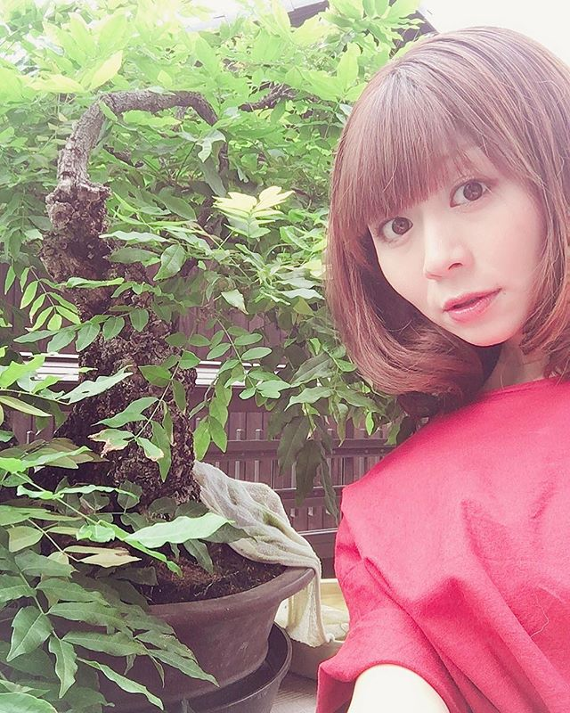 Stay safe! Typhoon coming to our area this weekend. We will move to inside small trees. Also big leaf tree too. They are easy to broke branch. take care!東海地方には週末に大きな台風が近づいています小さなものはもちろんですが、大きな木でも特に雑木は枝が折れやすいので室内へ避難させてあげましょう️️🌞 森友美.Tomomi Mori#bonsai#bonsaitree#bonsaiart#bonsaitree#bonsailove#bonsailovers#bonsaicare#bonsailife#bonsaigarden#bonsaiwork