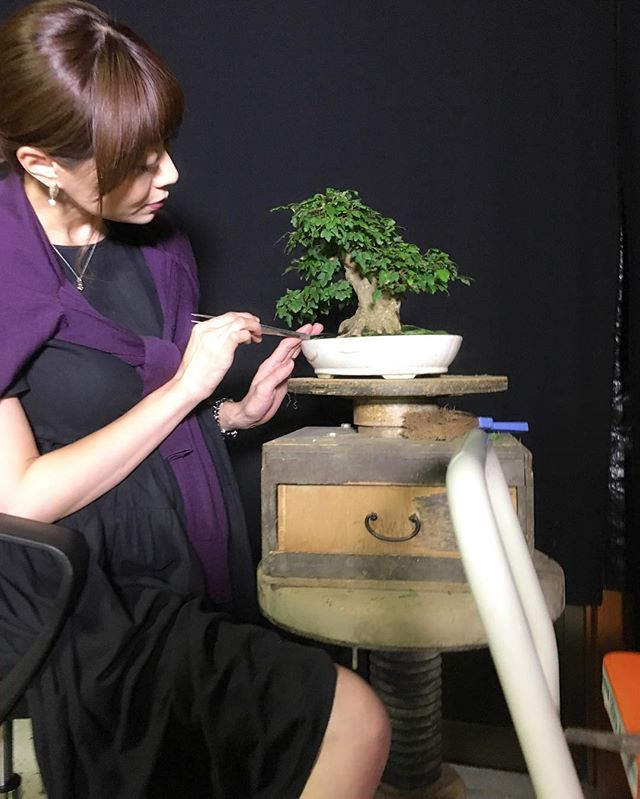 https://auctions.yahoo.co.jp/seller/bonsai_kichiguyヤフーオークション大量出品中です❣️よろしくお願いしますOur bonsais on Yahoo JAPAN auction now. Please check this out!! 森友美.Tomomi Mori#bonsai#bonsaitree#bonsaiart#bonsaitree#bonsailove#bonsailovers#bonsaicare#bonsailife#bonsaigarden#bonsaiwork