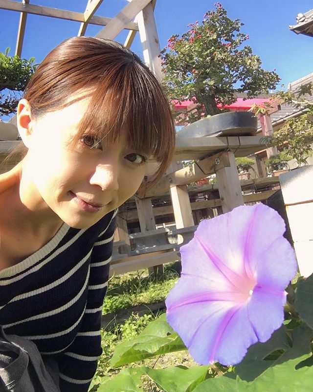 I knew morning glory blossoms are bloomed on fall.朝顔は秋も咲くんですね🏵 森友美.Tomomi Mori#bonsai#bonsaitree#bonsaiart#bonsaitree#bonsailove#bonsailovers#bonsaicare#bonsailife#bonsaigarden#bonsaiwork